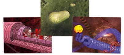 Example of creation of scientific 3D images